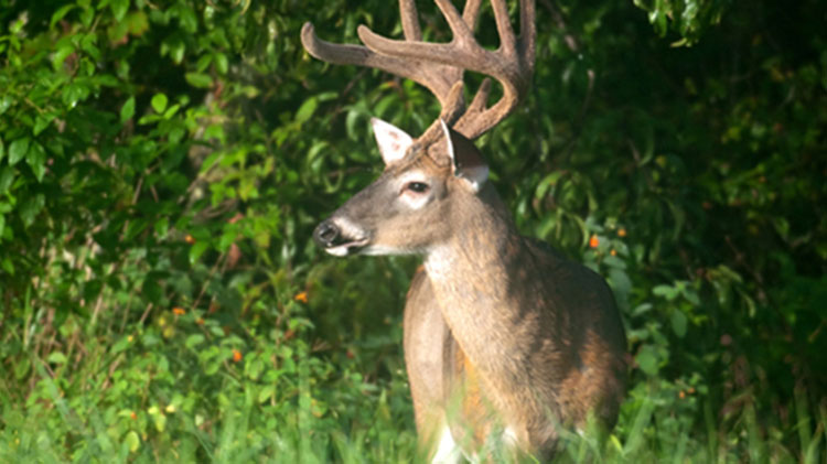 Fort Rucker Big Buck Contest