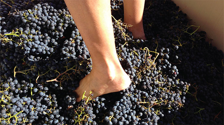 Grape Stomp Festival Day Trip